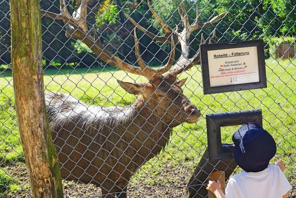 Wildpark Grafenberger Wald Familienausflug in Düsseldorf; Aktivitäten mit Kindern in Düsseldorf
