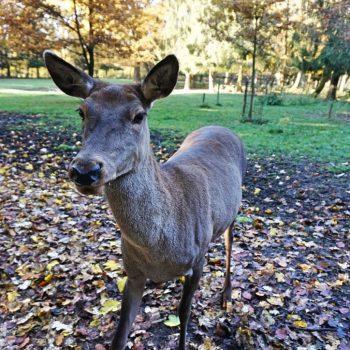Wildpark Poing in München, ein Ausflugsziel für Familien mit Kinder, Spielplatz, Natur, Tiere füttern