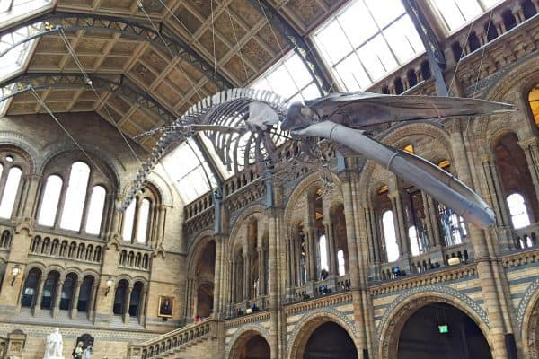 London mit Kindern Natural History Museum indoor activity with kids4