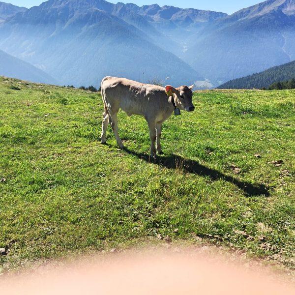 Wanderweg Ultental Wandern mit Kindern Urlaub mit Kindern Italien mit Kindern
