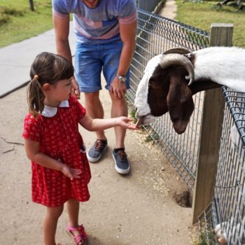 Wild life zoo Autralia Sydney Sydney with children