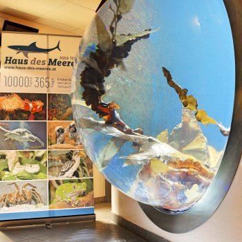 Kinderfreundliches Museum, Haus des Meeres in Wien, Österreich, familientauglich, Copyright by Haus des Meeres