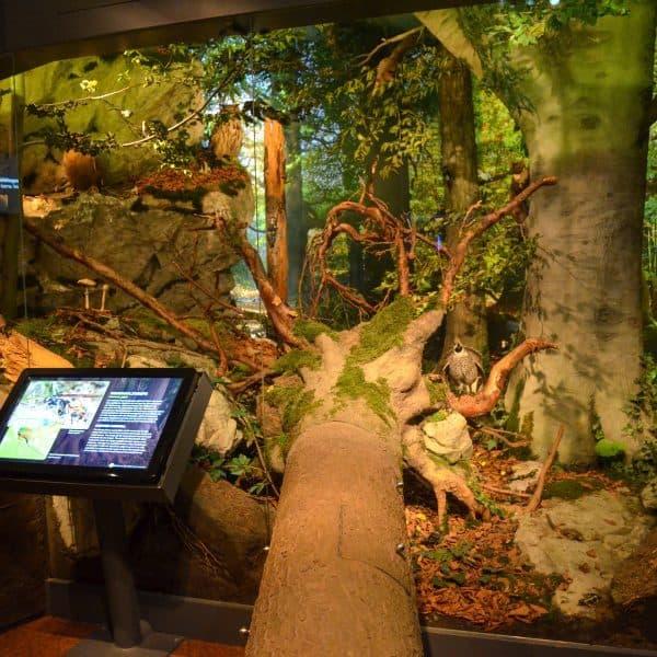 Kindergerechtes Museum Haus der Natur mit Kindern in Salzburg; Leben im Wald