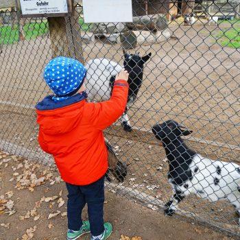 Tierpark Tannenbusch in Dormagen, bei Düsseldorf, Wildpark mit Streichelzoo, the urban kids