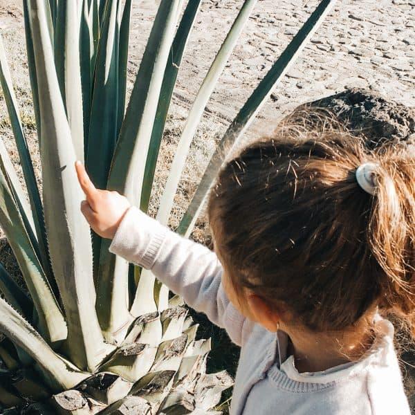 Neues Entdecken auf der Familienreise durch Mexiko mit Kindern