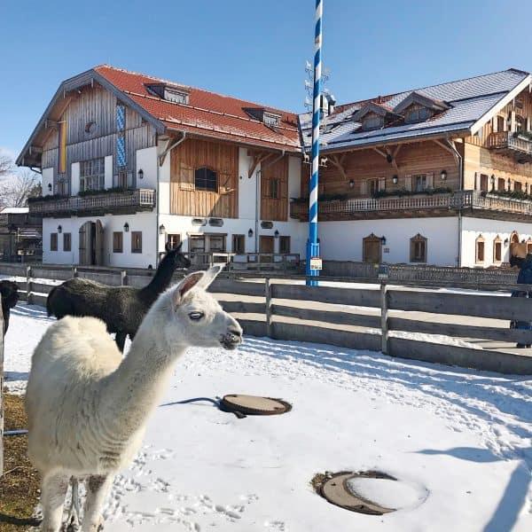 Tiere erleben auf Gut Aiderbichl, tolles Ausflugsziel mit Kind im Münchener Umland