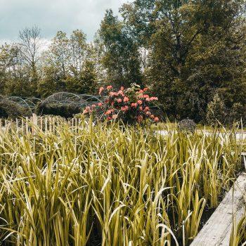 Familienausflug zum WELEDA Erlebniszentrum - Führung durch den Heilkräutergarten