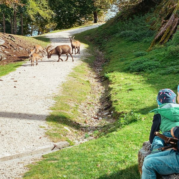 Familienausflug zum Tierpark Rosegg, Kärnten mit Kind, Österreich , Carinthia, Austria