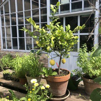 Grüner Garten Gerswalde in der Uckermark, Tipp Familienausflug von Berlin aus