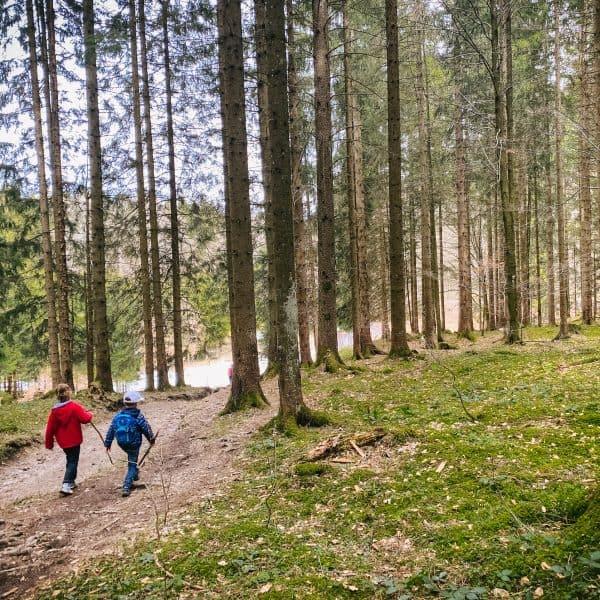 familienfreundliche Wanderung mit Kindern im Chiemgauer Land zum Heubgerg - Krokusblüte - Krokuswiese5