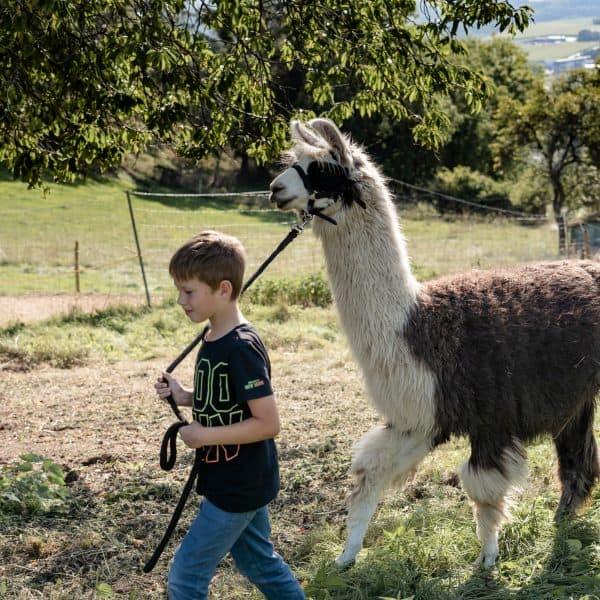 Eine prima Idee für deinen Familienausflug: Lama-Wanderung in der Eifel mit Kindern