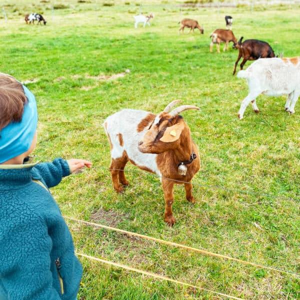 Ausflug mit Kindern im Allgäu - das schwäbische Bauernhofmuseum - Freilichtmuseum